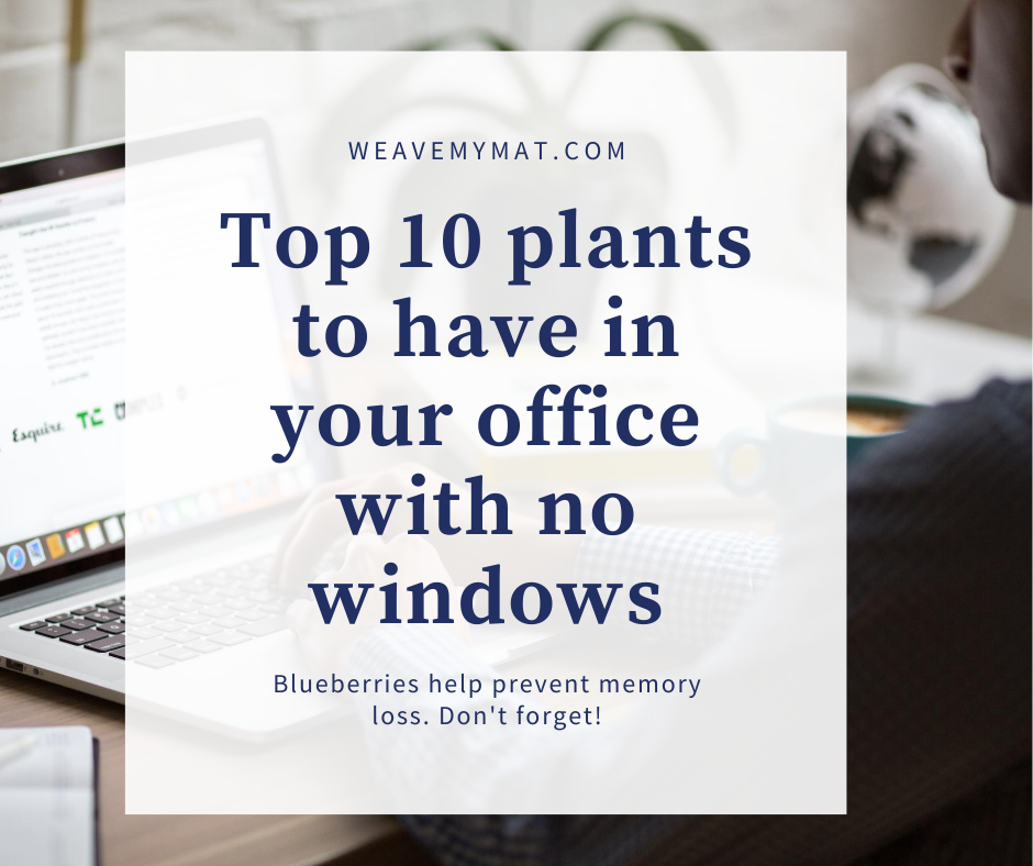 Top 10 plants to have in your office with no windows